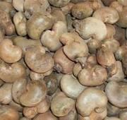 selling cashew nuts