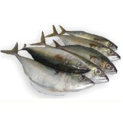Online Fish store with free home delivery service Vasco Goa.